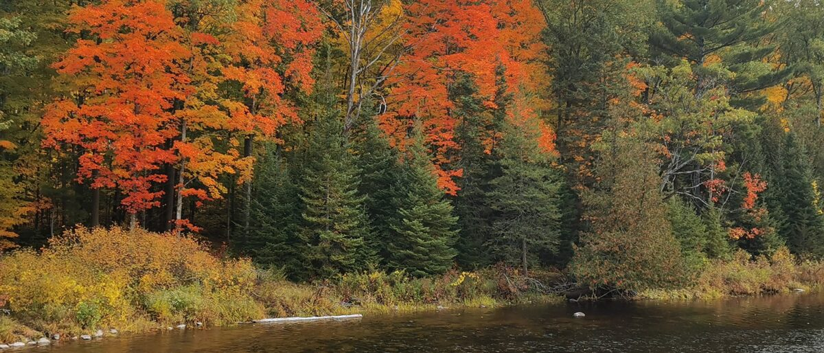 Permalink to: Fall at Callaghan's Rapids